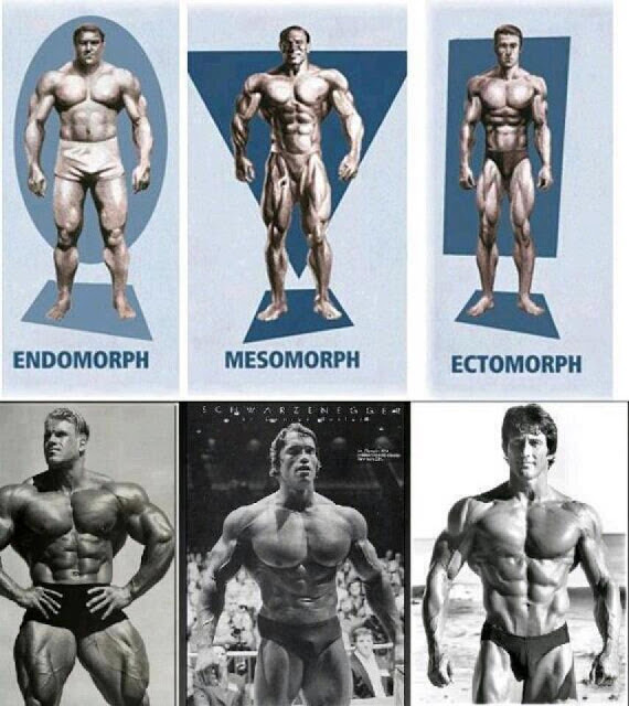 Choose Your Body Type