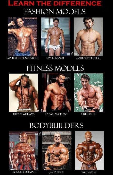 Fashion Models, Fitness Models, Bodybuilders differences