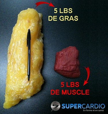 5 pounds of Fat vs 5 pounds of Muscle
